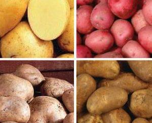 Patate da semina: grade (caratteristico e descrizione)