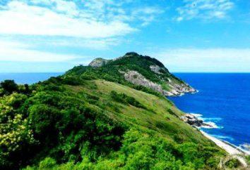 Isola di serpenti in Brasile: come visitare, cosa vedere
