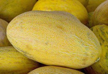 Melon Gulab: fotos, opiniões. Como escolher um melão Gulab?