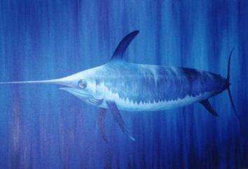 O peixe mais rápido do mundo é capaz de ultrapassar o carro