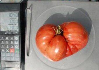 Minusinsk tomate: Descrição da variedade, peso, sabor, o cultivo