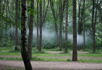 parco Timiryazevskiy: il luogo ideale per rilassarsi
