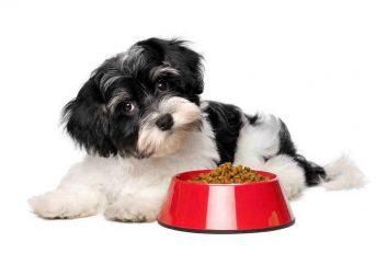 Sucha karma dla psów małych ras