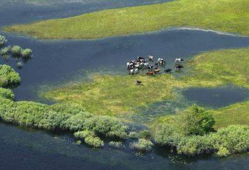 Pripyat río: fuentes, descripción y ubicación en el mapa. Donde está y donde el río desemboca en el Pripyat?
