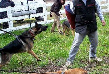 """Jak nauczyć psa komendy """"FAS""""? Teraz dowiadujemy się!"""