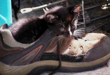 Jak buta usunąć zapach moczu kota: metody i zalecenia