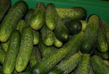 Cetriolo Meringa: i vantaggi della varietà e consigli sulla coltivazione