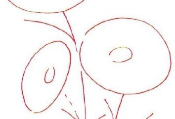 Jak narysować stokrotkę: instrukcja