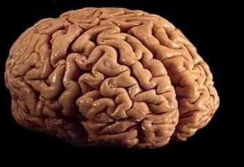 """Mente – ¿qué es esto? Significado de la palabra """"mente"""""""