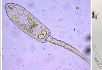 Il verme parassita: tipologie, le misure di rischio e di controllo