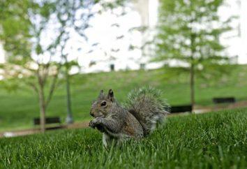 Qual è la proteina alimentata nel parco, e quali scoiattoli piace?
