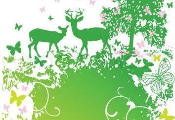 Wildlife – to niesamowity dar, że możemy stracić