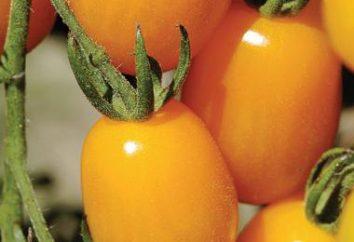 Senza pari resistente alla peronospora, grado. pomodoro Goldfish