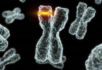 Spontane Mutation: Einstufung, Ursachen, Beispiele
