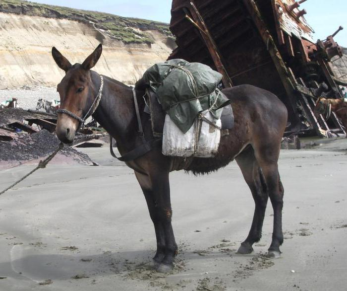 paarungsritual bei eseln