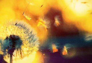 « Dandelion Wine »: un résumé de l'histoire et le symbolisme