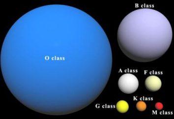 Białe gwiazdki: nazwa, opis, charakterystyka