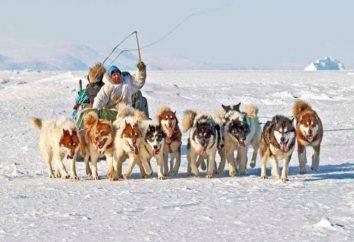 Groenlandia perro – descripción de la casta