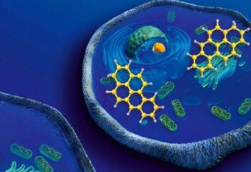 Substancje mineralne w komórce i ich znaczenie. Rola minerałów w komórce