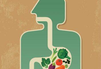 Où les nutriments pénètrent dans le sang chez les humains?