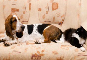Jak pozbyć się zapachu moczu na kanapie na zawsze