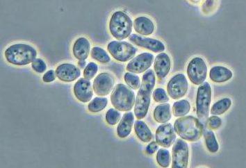 Quelle est l'essence de la reproduction sexuelle (biologie, 8e année)