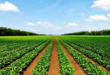 """Il concetto e la struttura dei terreni agricoli. Legge federale №101-FZ """"sul fatturato dei terreni agricoli"""""""