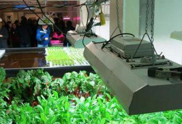 Lampade fluorescenti per impianti: come scegliere? L'influenza di una crescita pianta lampada fluorescente