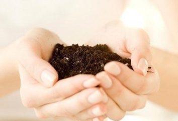Was es besteht aus dem Boden? Sandige Böden. sauren Böden