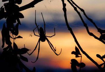 Sonho: o que é uma aranha e uma web