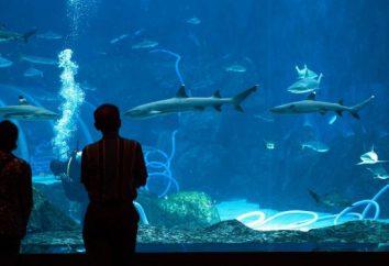 Najbardziej interesującym faktem na temat życia morskiego. Niesamowite fakty dotyczące zwierząt morskich