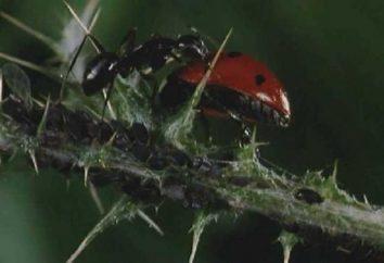 La lutte contre les fourmis de jardin – une question d'honneur tout jardinier
