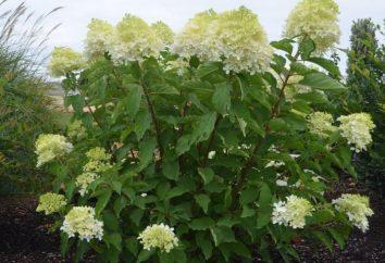 arbusto ornamental: legalizar el cuadro interior