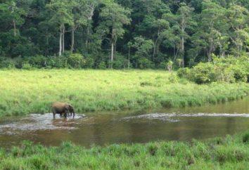 Ramiona i flagi Gabon: Opis i znaczenie symboli