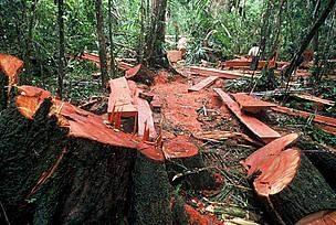 Jaki jest degradacja przyrody?