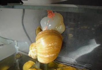 Jak hodować ślimaki akwariowe