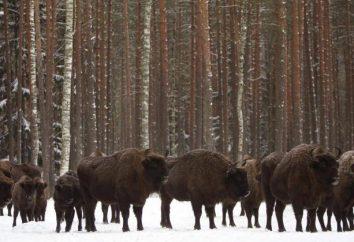 Minerały Białoruś, ich stan i wykorzystanie