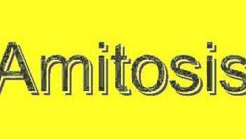 Amitosis – è un modo di divisione cellulare