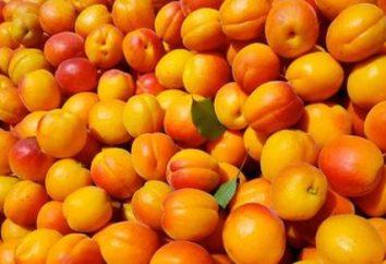 Erzähl uns von Aprikosenkernen: Die Verwendung des Produkts und Schaden