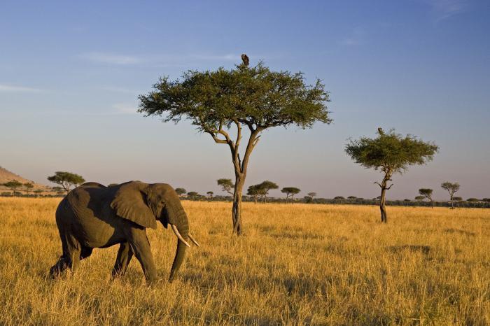 Savane africaine photo les animaux de la savane africaine - Animaux savane africaine ...