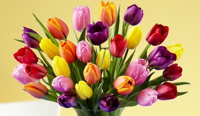 Traumdeutung: eine Tulpe. Warum träumst du von einer roten Tulpe?