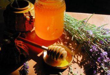 Lavendelhonig: nützliche Eigenschaften und Gegenanzeigen