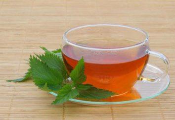 12 benefícios surpreendentes de chá de urtiga, você deve estar ciente