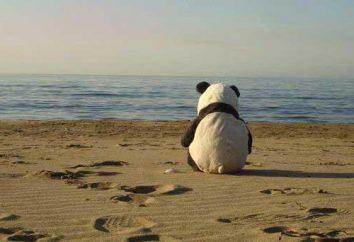 O stanie samotności: dlaczego są tak popularne?