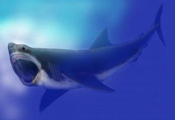 Gli scienziati hanno finalmente scoperto cosa ha causato l'estinzione di Megalodon
