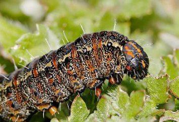 """Faz para decoração de jardim """"caterpillar"""" com suas próprias mãos de pedras e barro"""