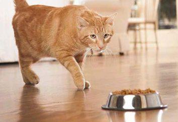 Jak wybrać jakość jedzenia dla kotów dużych ras?
