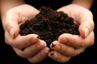 Fertilizantes para o jardim: em favor da agricultura biológica