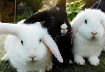Mogę kąpać dekoracyjne królika? Zalecenia dotyczące opieki i karmienia