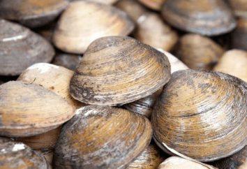 La alimentación de almejas? Algunos datos interesantes de la vida de cuerpo blando